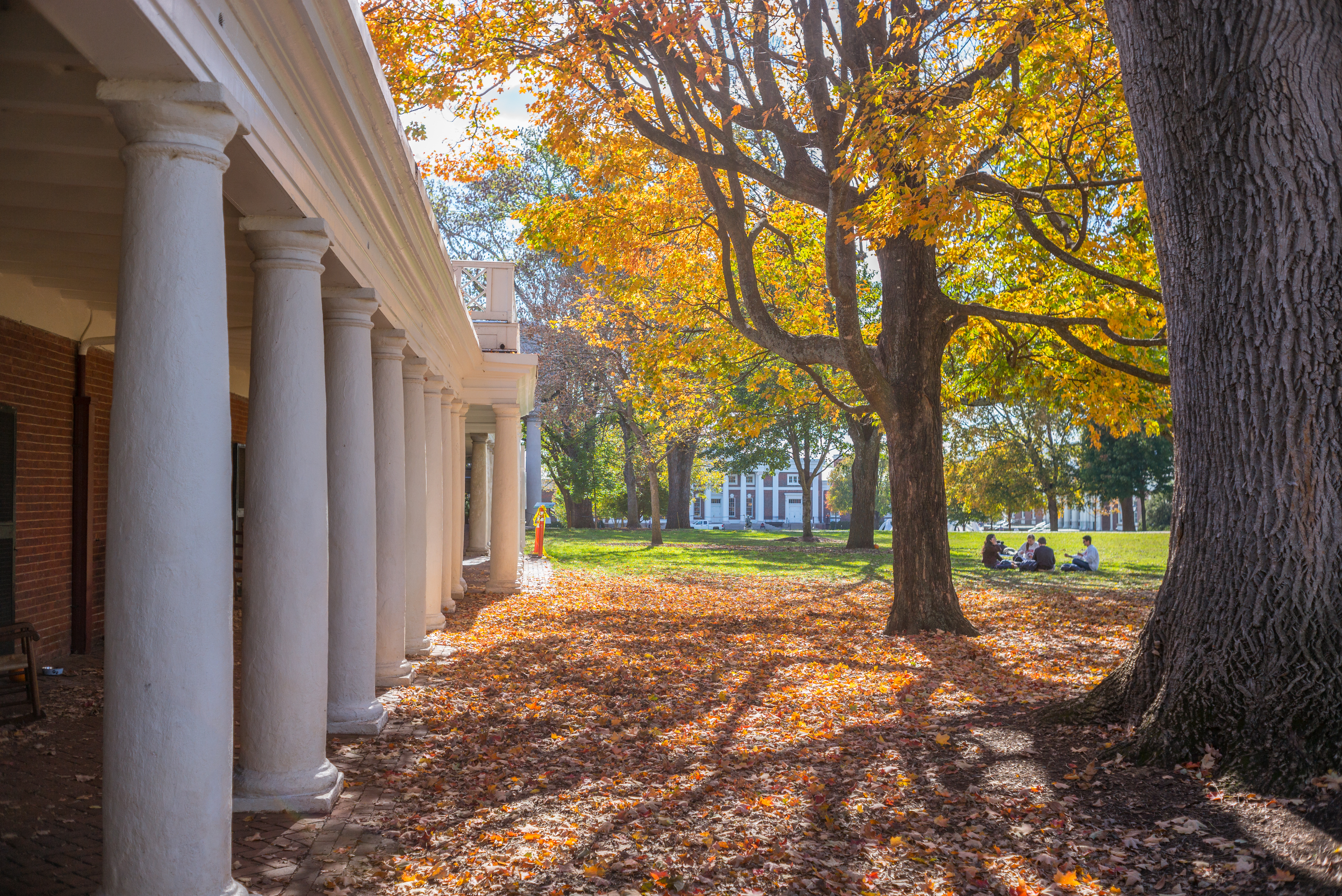 Photo of the Lawn during fall with bright yellow leaves falling from a tree